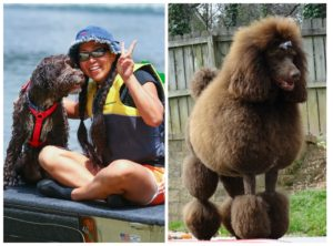 PicMonkey Collage Boat and Poodle 04-26-16